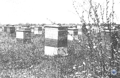 Пасека колхоза «Зоря комунізму». Городище, 1980 г.