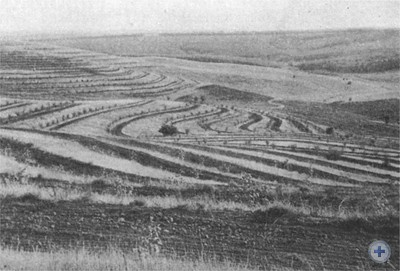Облесение склонов и балок в колхозе «Правда». 1977 г.