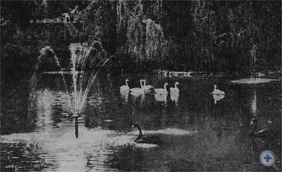 Озеро в Стрыйском парке. Львов, 1975 г.
