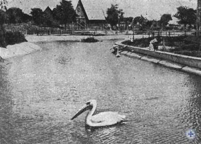 В одном из уголков Николаевского зоопарка. 1980 г.