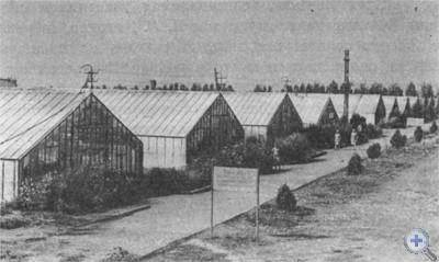 Тепличный городок совхоза «Інгулецький». Лозоватка, 1976 г.