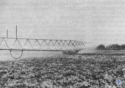 Орошение овощей в совхозе им. Карла Либкнехта. Новополье, 1976 г.