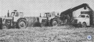 Уборка кукурузы на силос в колхозе «Дружба». Новоивановка, 1976 г.