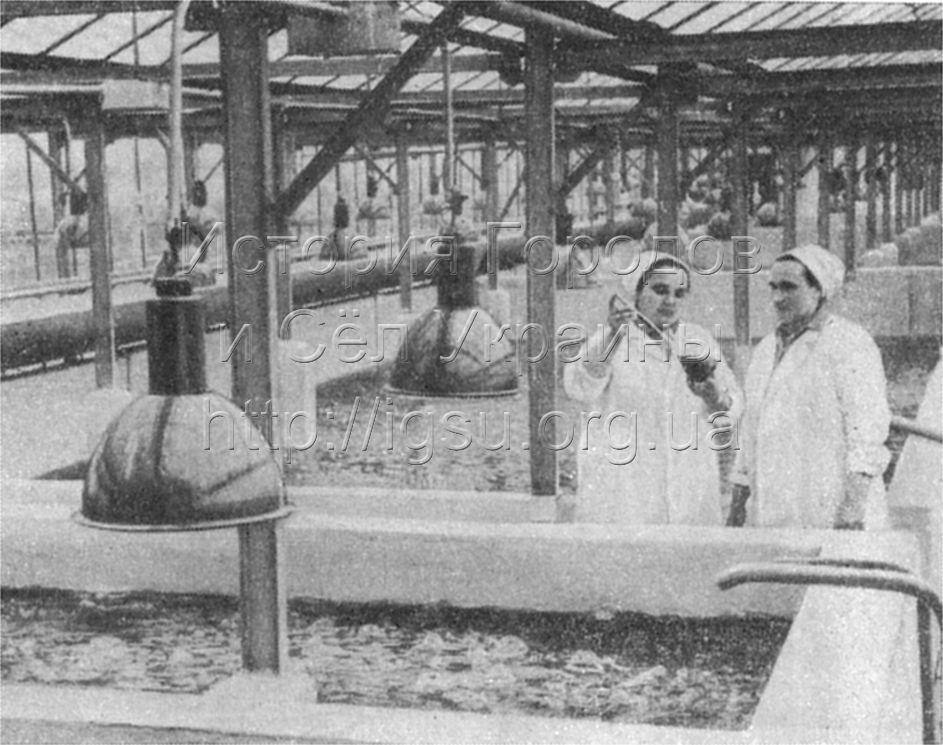 Цех хлореллы в колхозе «Перше Травня». 1976 г.